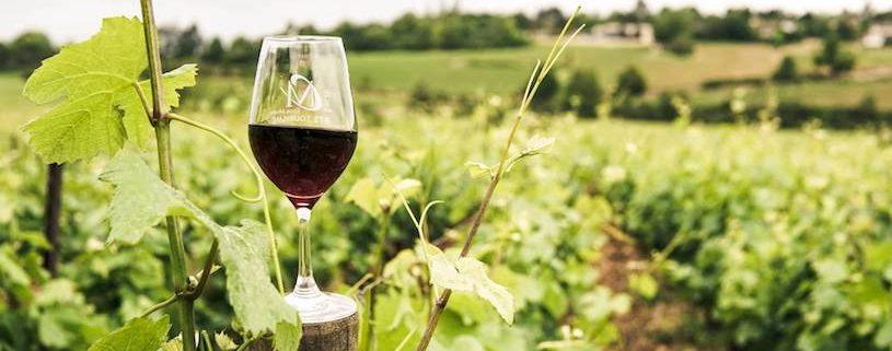 Rund um Wein